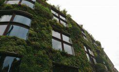 ¿Por qué deberías tener un jardín vertical?