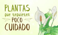Plantas que requieren poco cuidado